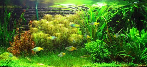Растения в аквариуме для начинающих