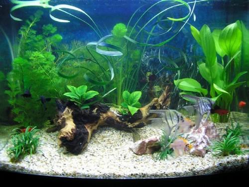 Подбор и содержание аквариумных растений