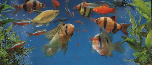Кормление взрослых аквариумных рыбок