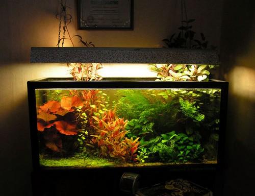 Все о аквариум освещение