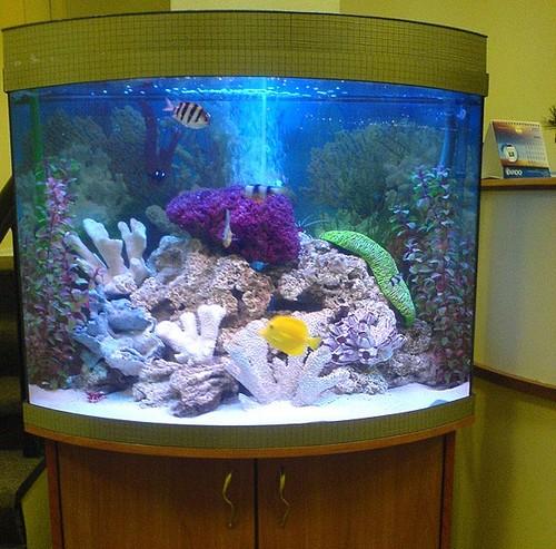 Планирование аквариума