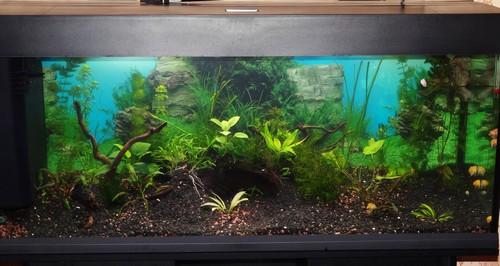 Советы по выбору аквариума