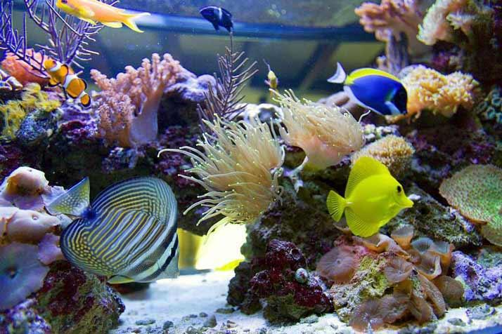 Аквариумные морские рыбки и прочие обитатели