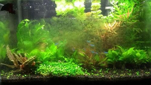 Аквариумные водоросли. Виды водорослей и избавление от них