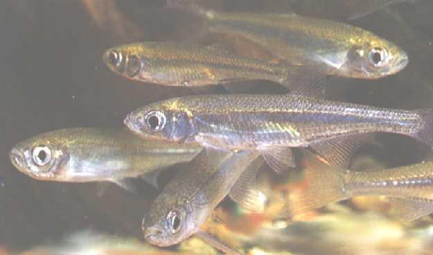 Как правильно ухаживать за мальками аквариумных рыбок