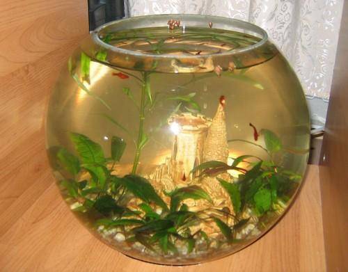 Круглый аквариум. Оформление круглого аквариума