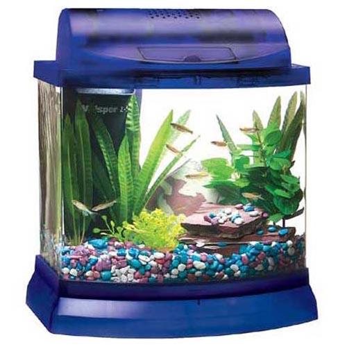 Мини-аквариум, его достоинства и недостатки