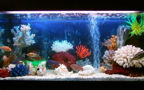 оформление аквариума, дизайн аквариума, дизайн аквариумов ...