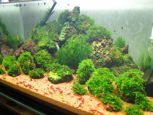 Необходимые условия для выращивания аквариумных растений
