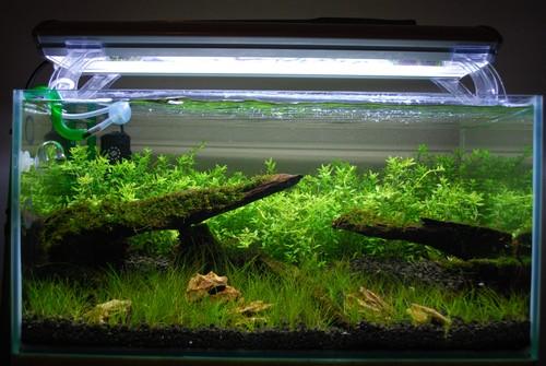Люминесцентные или светодиодные лампы для аквариума