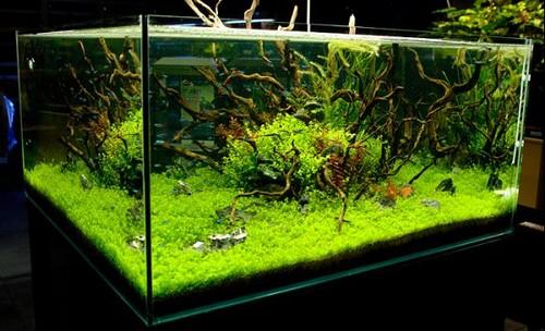 Оформление аквариума корягой