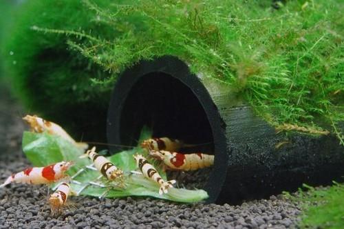 Укрытия для раков в аквариуме
