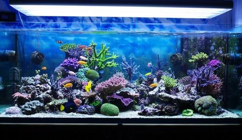 Кораллы в аквариуме.Содержание кораллов в аквариуме