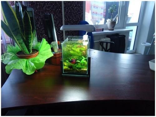 Легко ли ухаживать за маленьким аквариумом