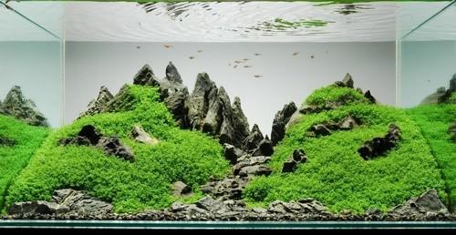 Что такое современный аквариум
