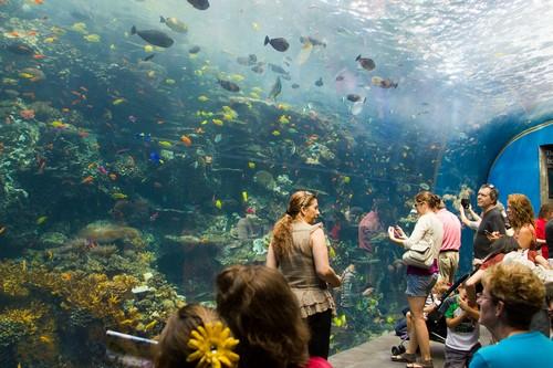 Терапевтическое воздействие аквариума