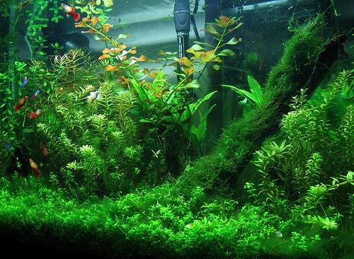 Аквариумные растения чем удобрять