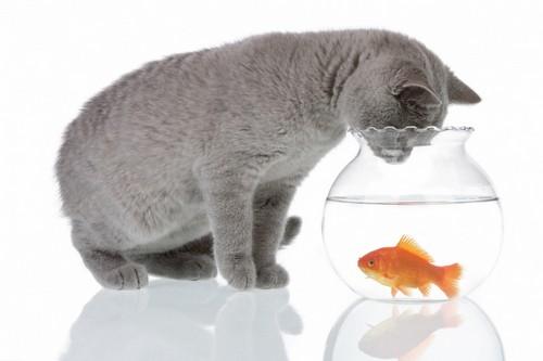 как поймать рыбку в аквариуме