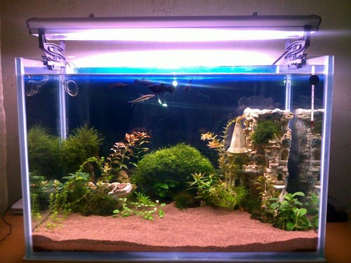 о подготовке грунта в аквариуме