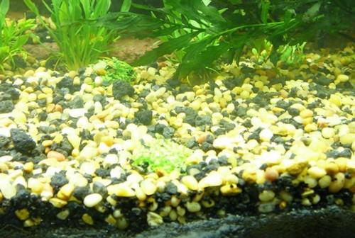подготовка грунта для аквариума