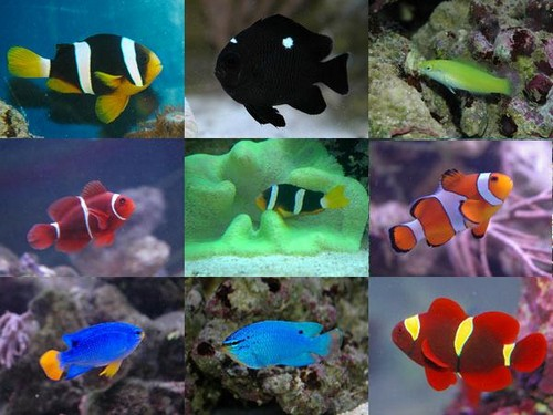 Совместимость рыбок в аквариуме