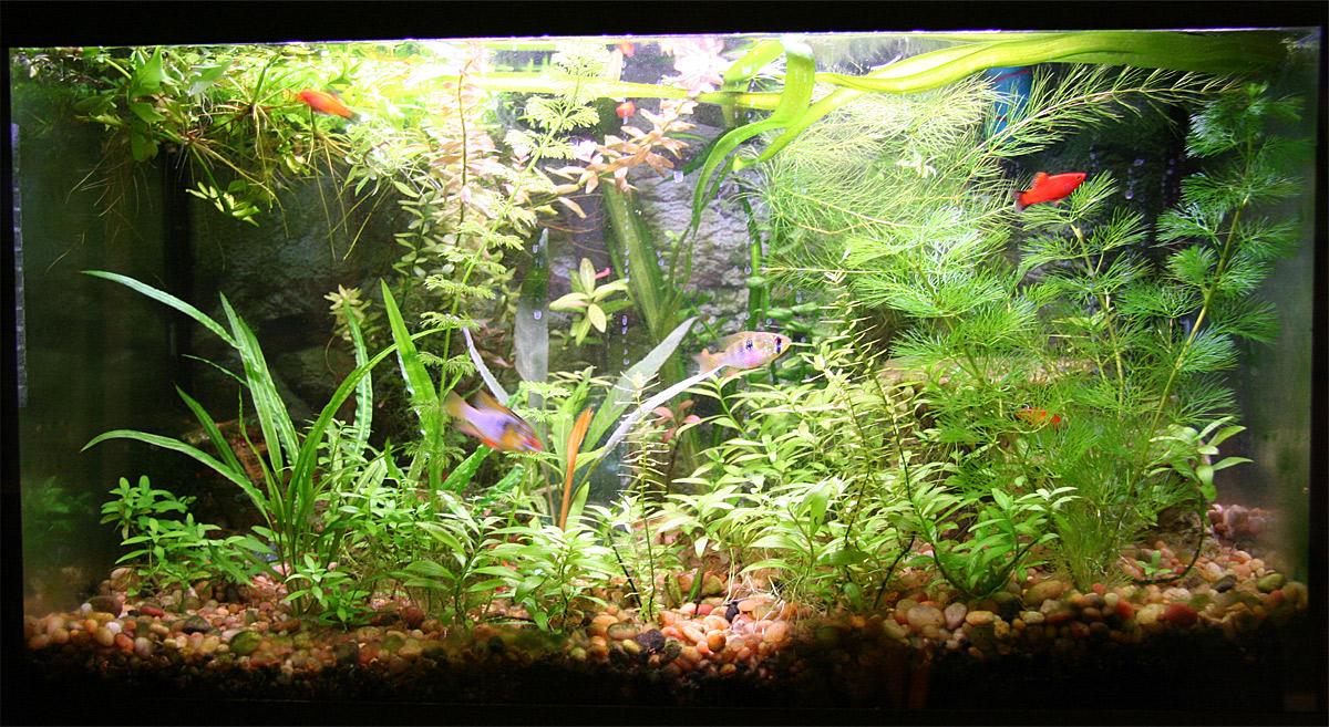 Содержание аквариумных рыбок. Как грамотно распределить пространство в аквариуме