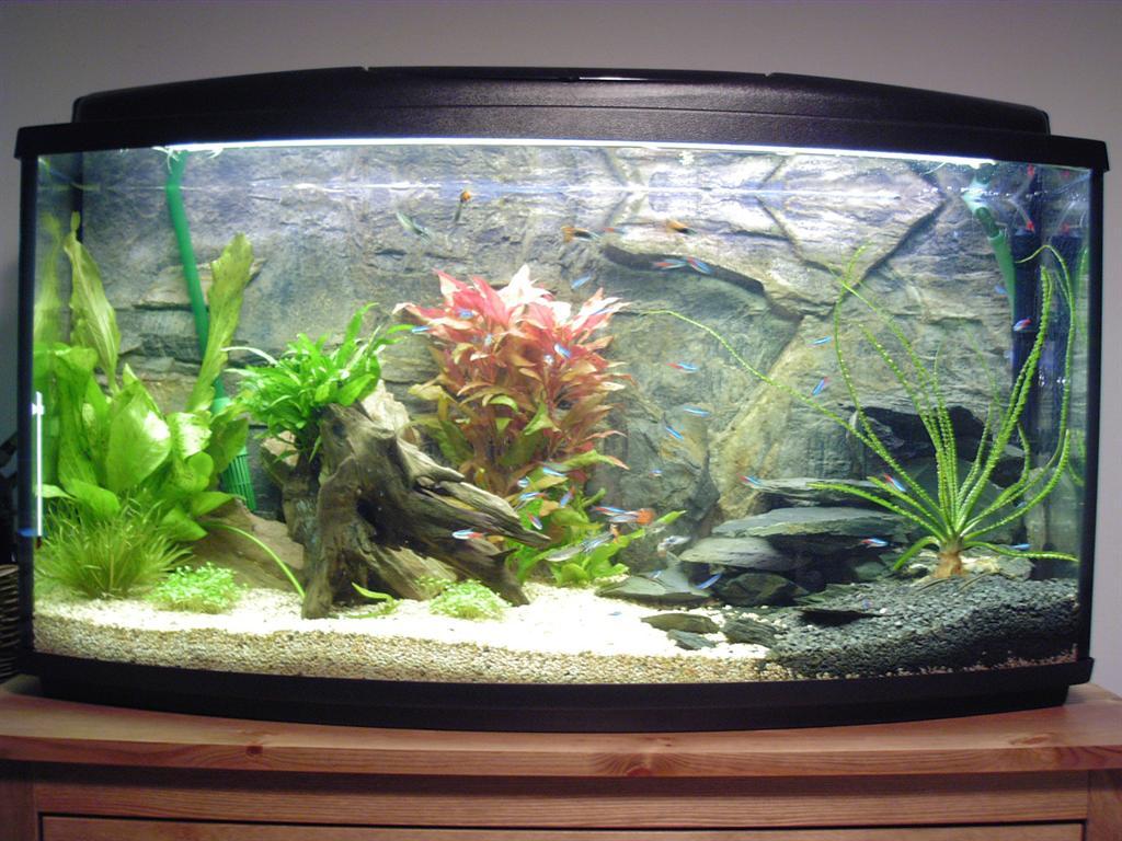 Декор аквариума фото