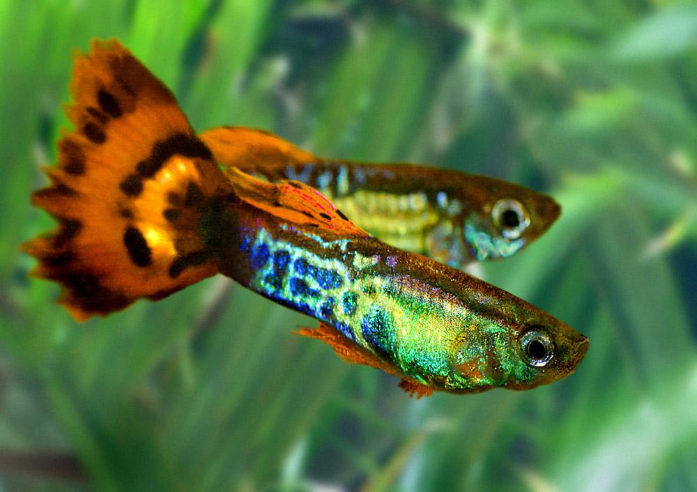 фото фильтр для аквариума фото