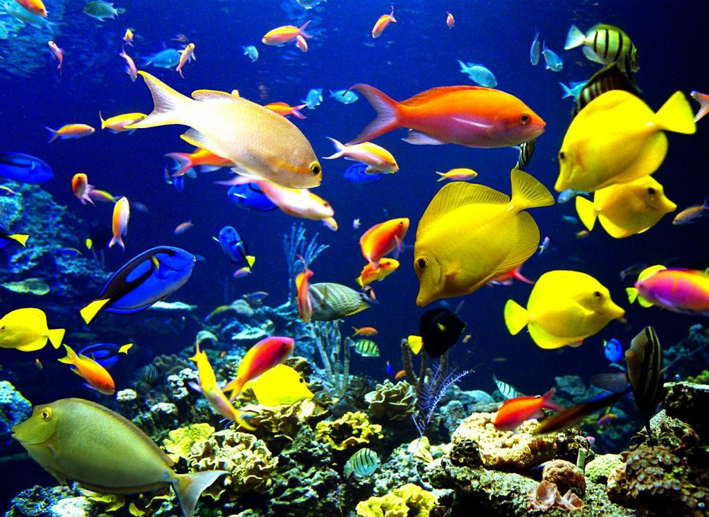 Для того чтобы в аквариуме