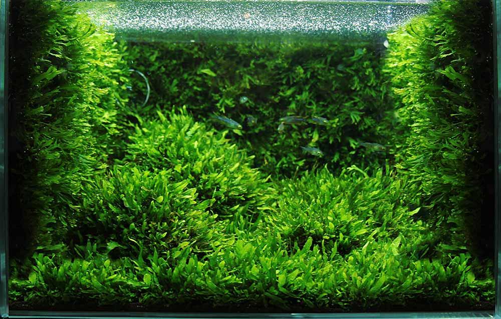 Нужен ли углекислый газ в аквариуме