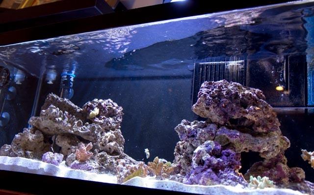 Пленка на поверхности воды в аквариуме