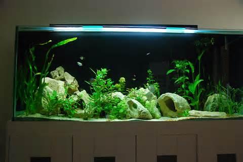 созревание аквариума