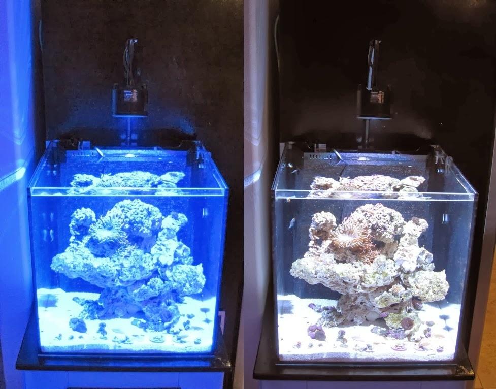 Как сделать светодиодное освещения для аквариума