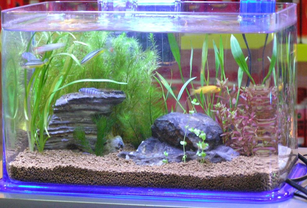 Как правильно отстаивать воду для аквариума