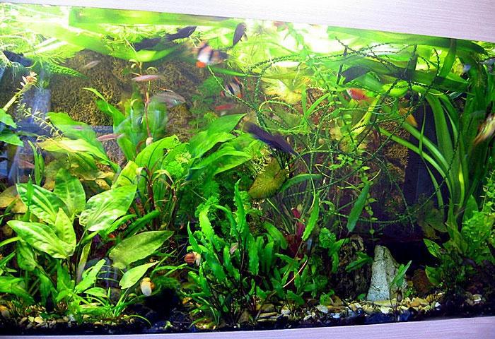 Фитофильтр для аквариума. Его предназначение в аквариуме с рыбками
