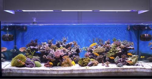 Морской аквариум. Основы, с чего начать 2