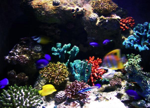 обитатели морских аквариумов