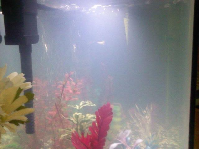 Почему быстро мутнеет вода в аквариуме