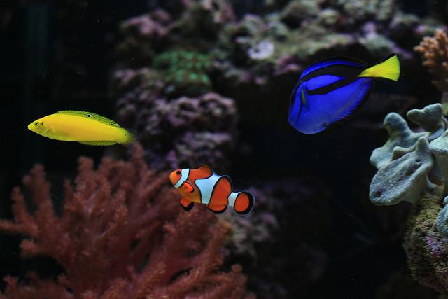 Покупаем аквариумных рыбок советы новичку