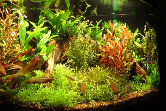 фон для аквариума 4