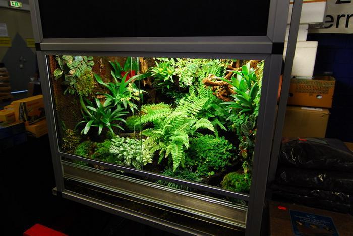 Как завести тропические растения в аквариуме Создаём флорариум