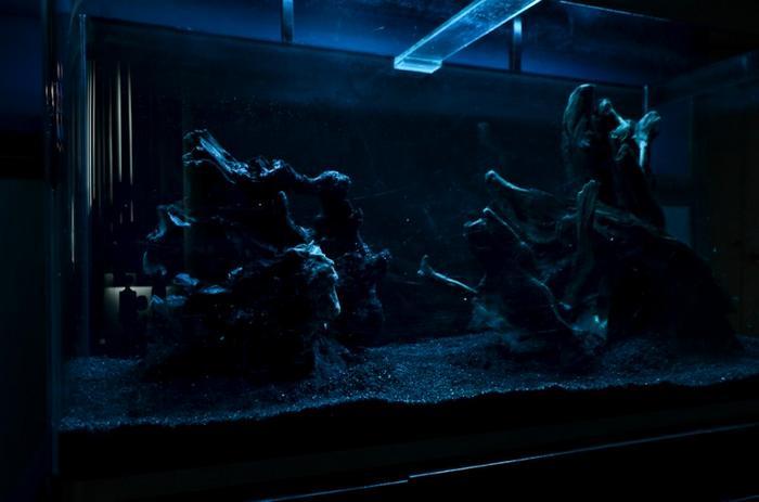Нужен ли свет аквариуму ночью