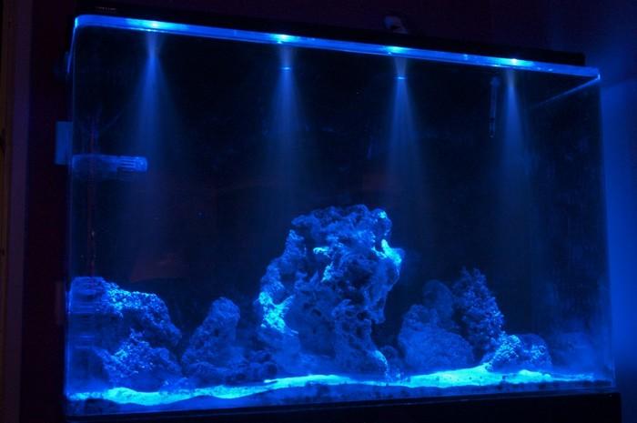 Выключать ли свет в аквариуме на ночь