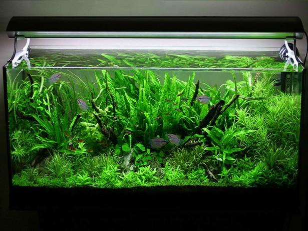 Как сделать аквариум по типу травника