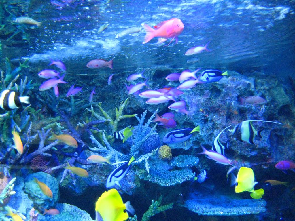 Книги про аквариумных рыбок