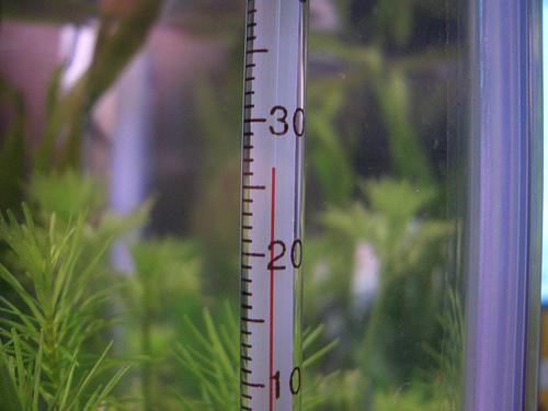 Какая температура должна быть в аквариуме и как ее поддерживать