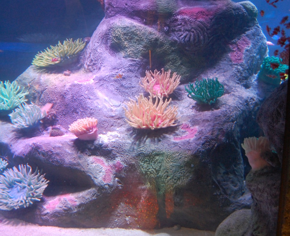 Морской аквариум основы