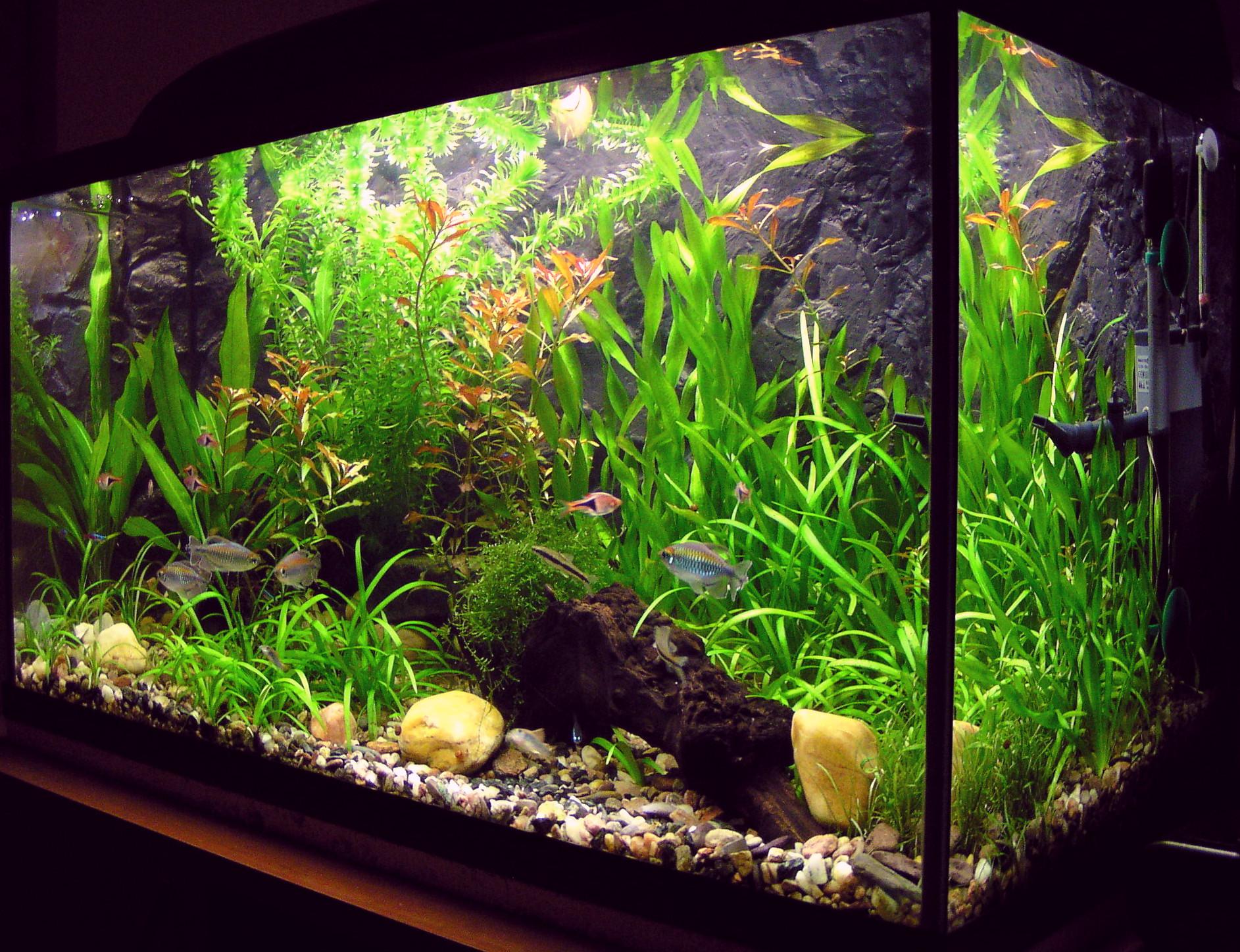 Морской аквариум. Основы, с чего начать 1