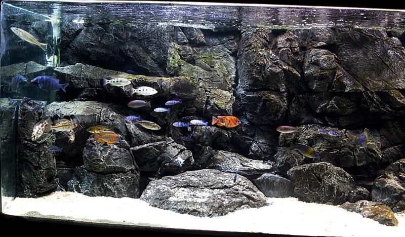 фон для аквариума 1
