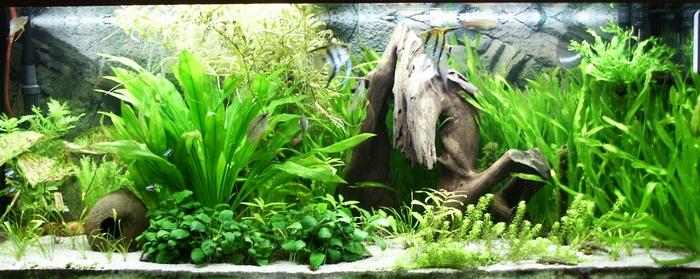 фон для аквариума 3